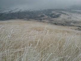 Sur chaque herbe se tasse l'eau en cristal de glace…