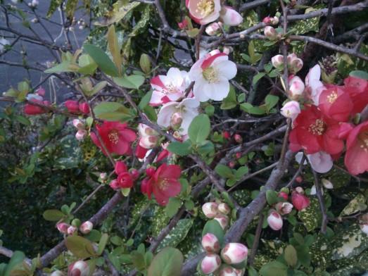 Un bel arbuste fleuri.