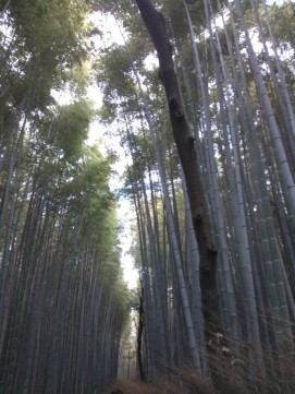 Bambouseraie d'Arashiyama.
