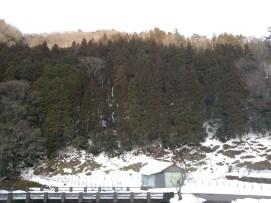 Forêt de conifères en arrière-plan.