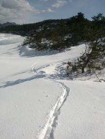 Des pas dans la neige…