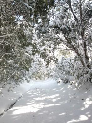 Sentier paisible empli de neige fraîche.
